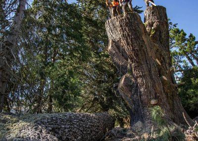 Queenstown Arborist RoyalTree team