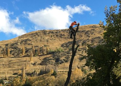 Queenstown Arborist RoyalTree removing a tree in sections