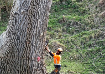 RoyalTree - tree services, tree removal and pruning