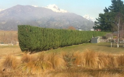 Hedge-athon