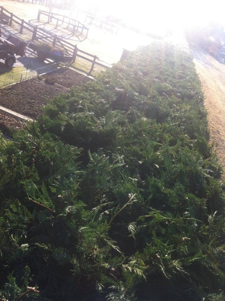 hedge3