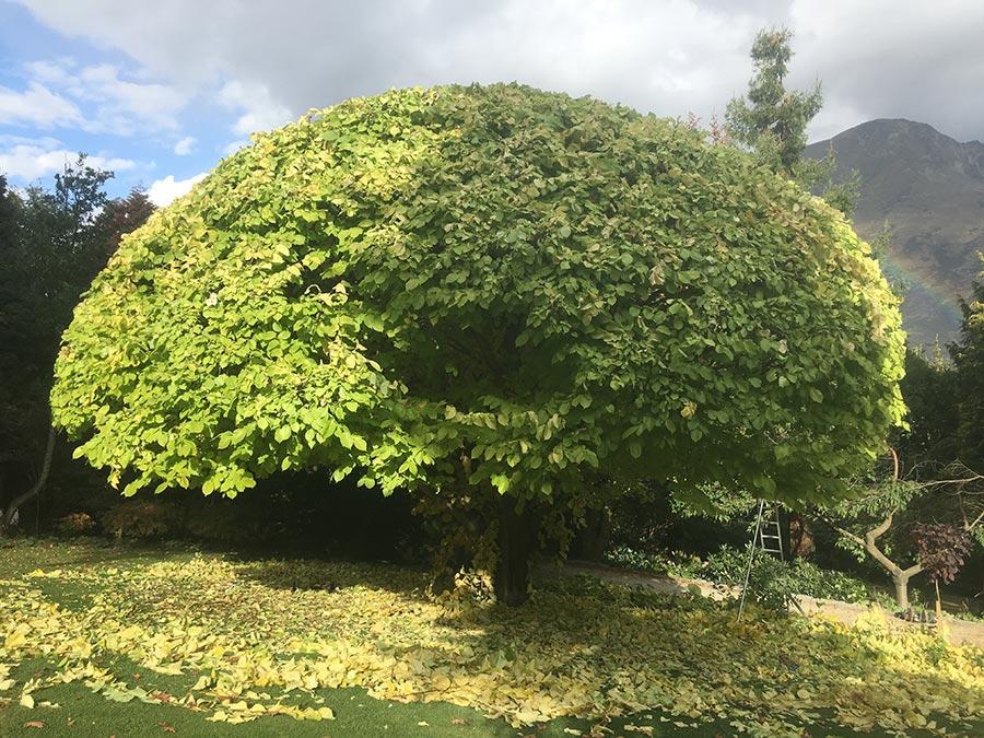 pruning-1