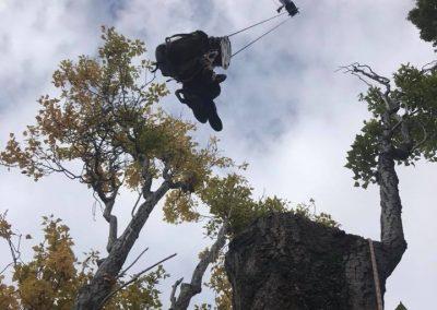 RoyalTree-Ltd -tree-felling-12