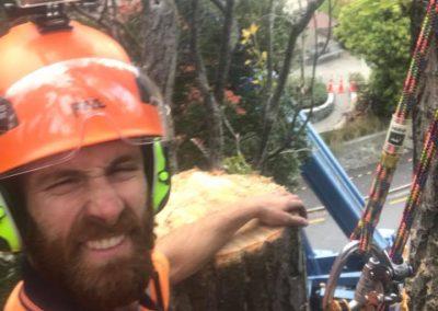 RoyalTree-Ltd -tree-felling-3