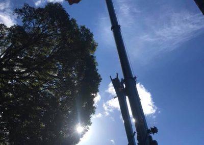 RoyalTree-Ltd -tree-felling-4