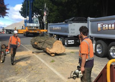 Large tree dismantling - Queenstown Arborist RoyalTree