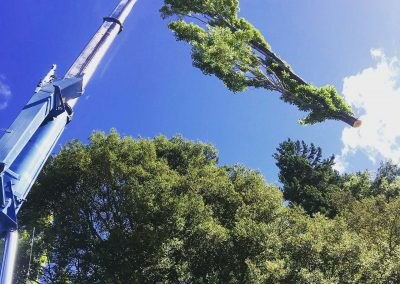 RoyalTree-Queenstown-Tree-Services